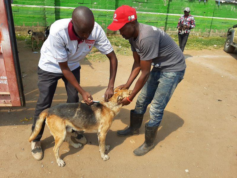 Vaccinatie hond tegen hondsdolheid